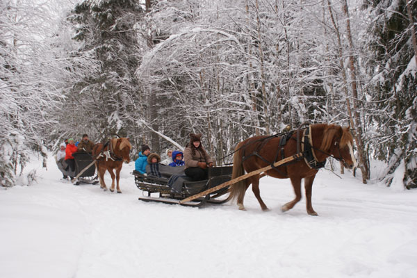 Ratsastusterapeuttien Talvipäivät 2020 sekä RT- koulutuksen 30v juhlat 1-2.2.2020