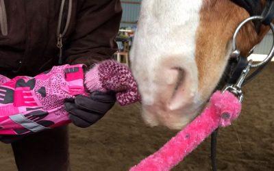 Seuravaa ratsastusterapia  koulutus