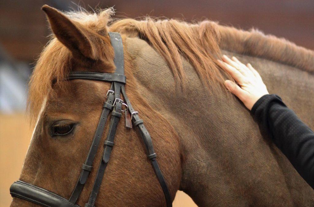 Haluatko jakaa  ammattitaitoasi tulevien ratsastusterapeuttikollegoiden käyttöön?